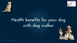 Health benefits for your dog with dog walker