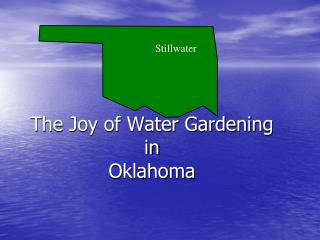 The Joy of Water Gardening in Oklahoma