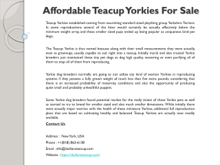 Affordable Teacup Yorkies For Sale