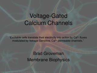 Voltage-Gated Calcium Channels
