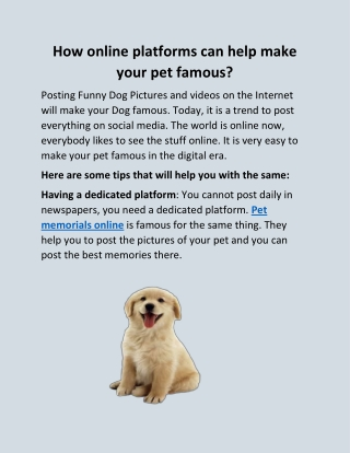 How online platforms can help make your pet famous?
