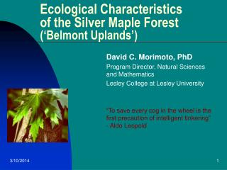 Ecological Characteristics of the Silver Maple Forest  ('Belmont Uplands')
