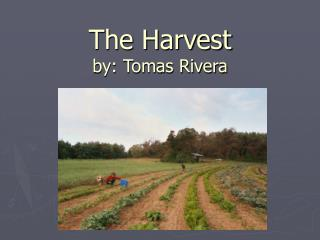 The Harvest by: Tomas Rivera