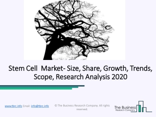 Global Stem Cell Market Opportunities And Industry Overview 2023