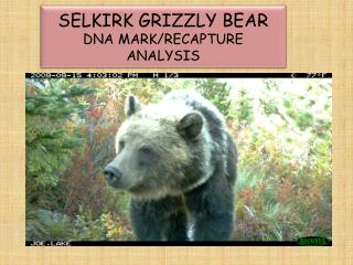 SELKIRK GRIZZLY BEAR DNA MARK/RECAPTURE ANALYSIS