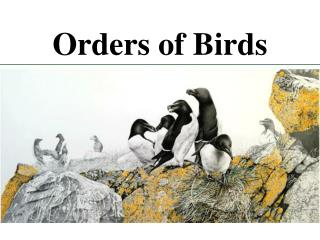 Orders of Birds