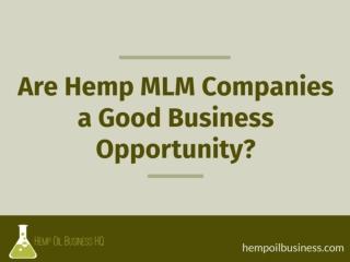 Are Hemp MLM Companies A Good Opportunity?