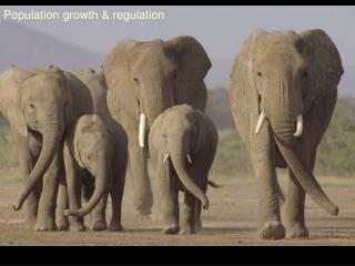 Population growth & regulation