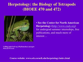 Herpetology: the Biology of Tetrapods (BIOEE 470 and 472)