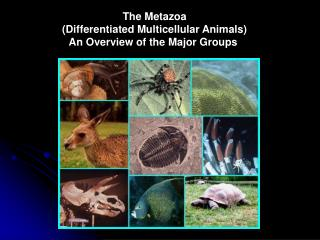 The Metazoa (Differentiated Multicellular Animals) An Overview of the Major Groups