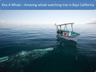 Amazing whale watching trip in Baja California