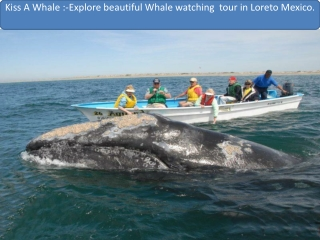 Explore beautiful Whale watching  tour in Loreto Mexico