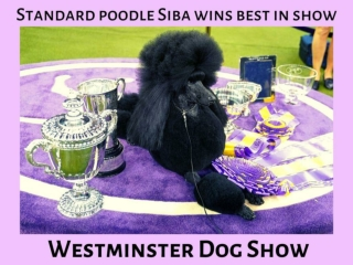 Westminster Kennel Club Dog Show 2020