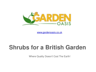 Shrubs for a British Garden