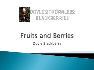 Doyle Blackberry