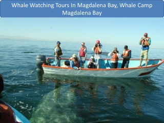 Whale Watching Tours In Magdalena Bay, Whale Camp Magdalena Bay