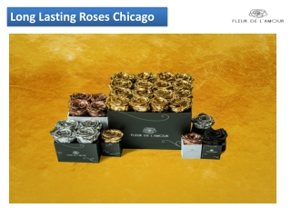 Long lasting roses Chicago