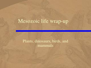 Mesozoic life wrap-up