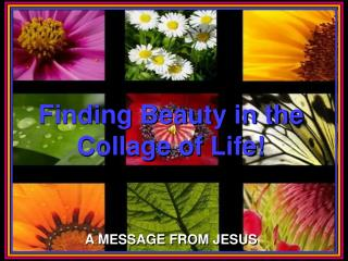 Finding Beauty in the Collage of Life!