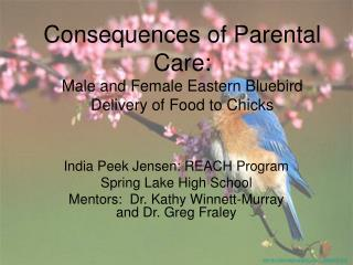 Consequences of Parental Care: Male and Female Eastern Bluebird Delivery of Food to Chicks