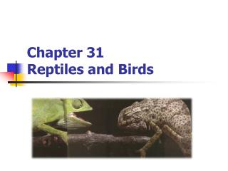 Chapter 31 Reptiles and Birds