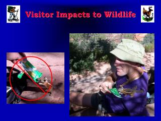 Visitor Impacts to Wildlife