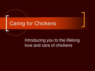 Caring for Chickens