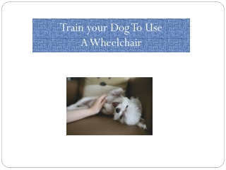 Train your Dog To Use A Wheelchair