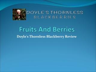 blackberry plants for sale
