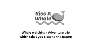 Whale watching - Adventure trip which takes you close to the nature