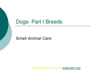 Dogs- Part I Breeds