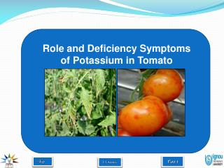 Role and Deficiency Symptoms of Potassium in Tomato
