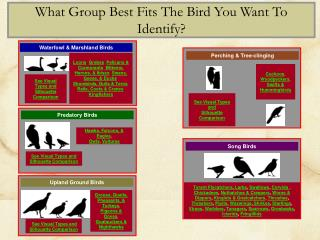 Use links on this side to go to Species Groups under each catagory: