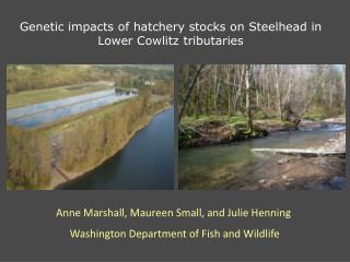 Genetic impacts of hatchery stocks on Steelhead in Lower Cowlitz tributaries