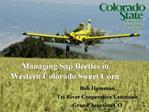 Managing Sap Beetles in Western Colorado Sweet Corn