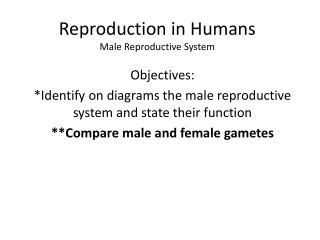 Reproduction in Humans Male Reproductive System