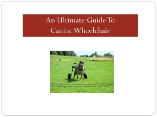An Ultimate Guide To Canine Wheelchair