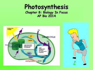 The Biochemistry of Photosynthesis