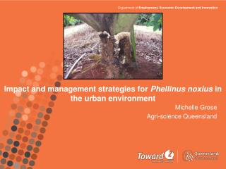 Impact and management strategies for  Phellinus noxius  in the urban environment