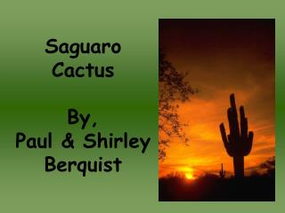 Saguaro Cactus By, Paul & Shirley Berquist