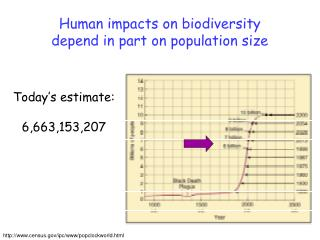 Human impacts on biodiversity depend in part on population size
