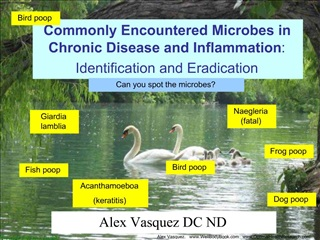 Commonly Encountered Microbes in Chronic Disease and Inflammation: Identification and Eradication