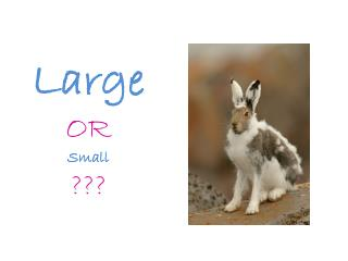 Large OR Small ???