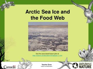 Arctic Sea Ice and  the Food Web