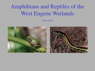 Amphibians and Reptiles of the West Eugene Wetlands Vanessa Post