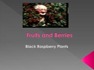 Thornless blackberry varieties