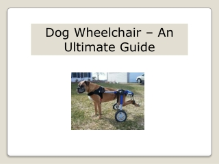 Dog Wheelchair – An Ultimate Guide